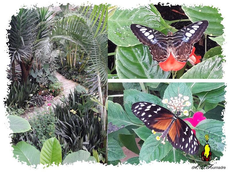 ART 2020 07 papillons 2