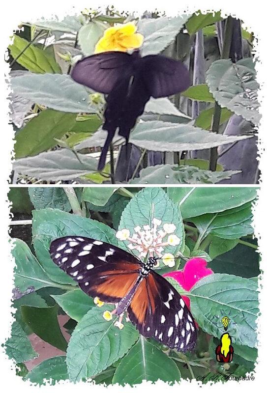 ART 2020 07 papillons 1